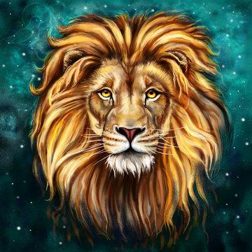 lion tlo