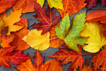 Wall Mural - Abstract background of autumn leaves.