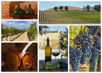 Winemaking and viticulture. Collage