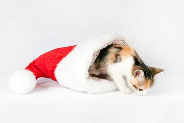 kitten in a santa hat.