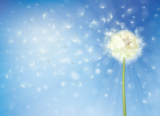 Vector  dandelion on sky background.