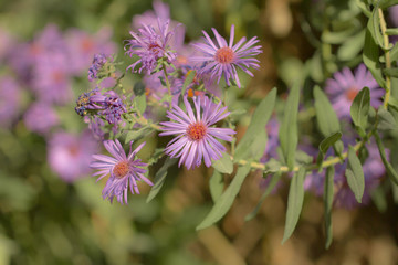 purple flower in nature