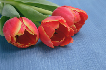 tulip on wooden table