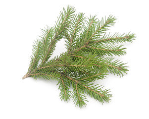 fir-tree with paper snowflake isolated on white