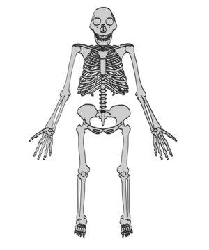 cartoon image of australopithecus afarensis