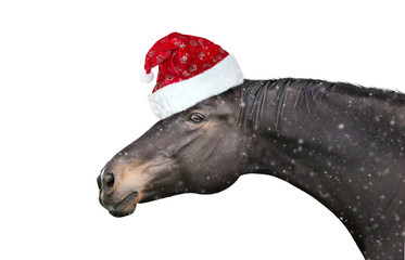 Black horse with  Christmas hat on white background