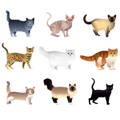Cats isolated on white vector set
