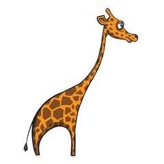 Funny cartoon giraffe on white background. Vector illustration