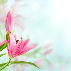 Pink lilies background