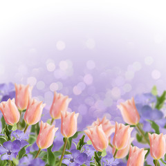 Postcard with fresh flowers tulips and periwinkle  and empty  pl