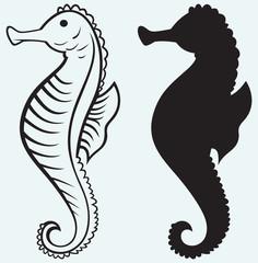 Seahorse isolated on blue background