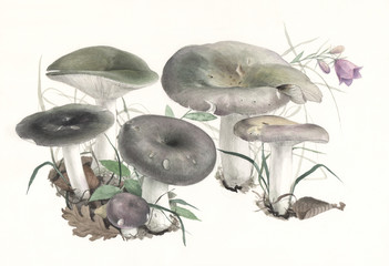 Hand-painted Mushrooms Russula cyanoxantha
