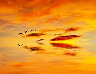 volando a ras del agua