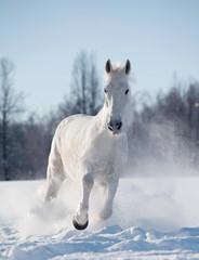 Wall Mural - winter horse