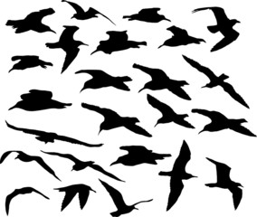 Vector set of silhouettes of 24 flying seagulls