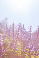 Poster de jardin Olive lavender Flowers