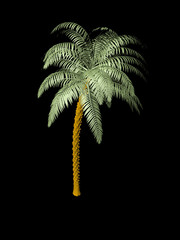 Palm tree in the dark