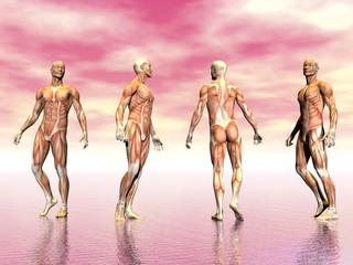 Muscles of man - 3D render
