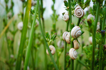 snails in the grass