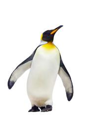 Fototapeten Pinguin Emperor penguins