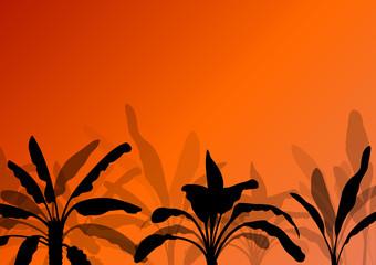 Exotic banana tree plants plantation detailed silhouette landsca