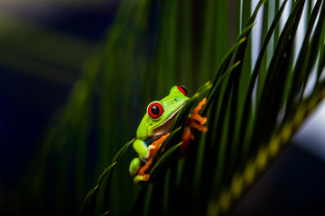 Exotic frog in tropical forest