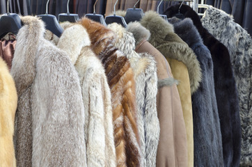 Row of coats made of animal fur Wall mural