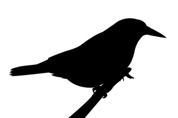 Silhouette of a bird on a branch.
