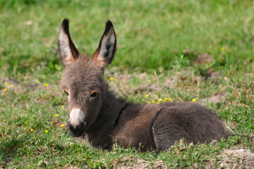 Baby donkey