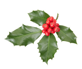 Holly twig isolated on white, clipping path