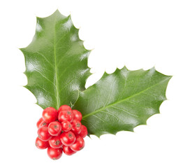 Holly, Christmas decoration on white, clipping path