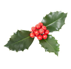 Holly, Christmas decoration on white, clipping path inc