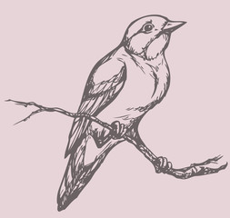 """Vector drawing of a series of sketches """"Birds"""". Flycatcher"""