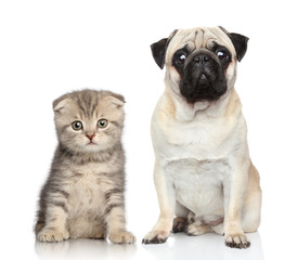 Wall Mural - Dog and kitten
