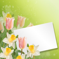 Postcard with fresh flowers daffodils and tulips  and empty  pla