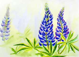 Lupine flowers, watercolor