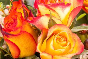 bunte frische blumen rosen in rot und orange dekoration