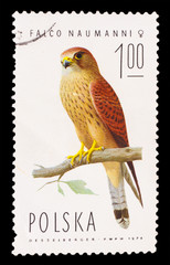 POLAND - CIRCA 1974: A stamp printed in Poland, shows small bird