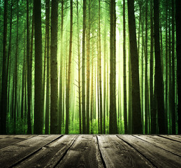 Mystical green forest with wooden floor