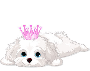 Canvas Prints Fairytale World Havanese Puppy with crown