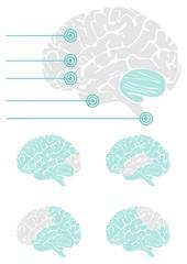 mózg widok z boku schemat elementy infograficzne