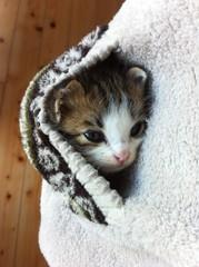 ポケットの中の子猫