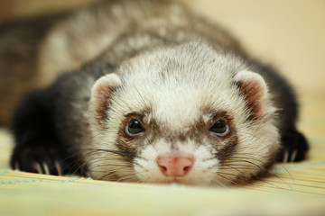 Funny ferret on bamboo mat Wall mural