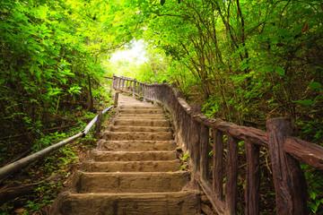 Stairway to forest, Kanchanburi,Thailand