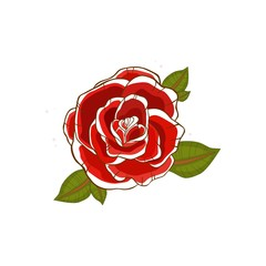 Red rose flower with green leaves isolated on white background