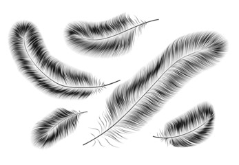 Black feathers on a white background