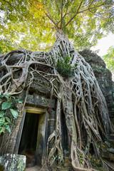 Ruines et racines