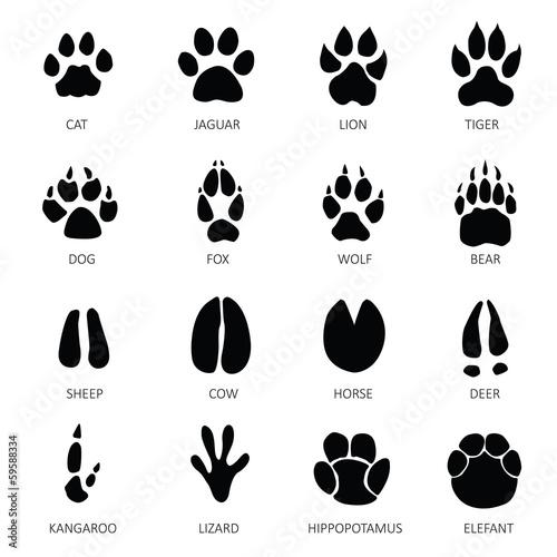 animals with tracks