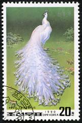 stamp printed in DPR Korea shows peacock(pavo cristatus)