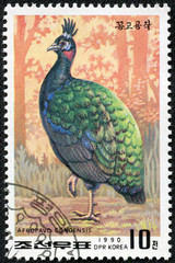 stamp shows a Congo peacock(afropavo congensis)